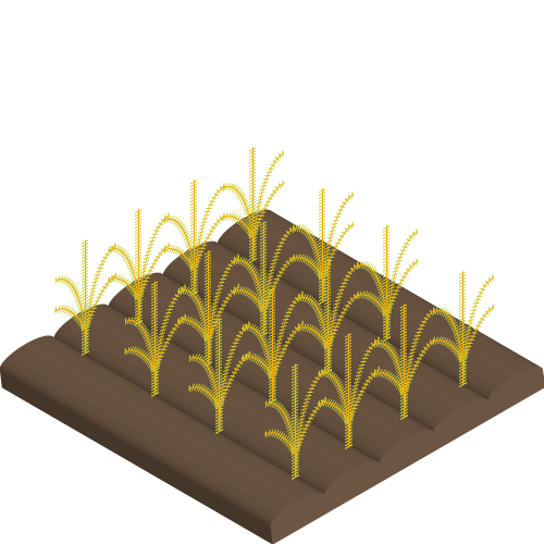 Cultivated Crops
